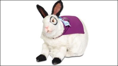 Comment s'appelle ce lapin qui auparavant était un humain ?