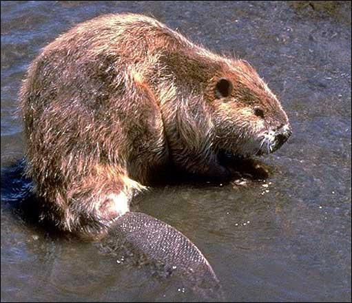 Quel est le nom de cet animal ?