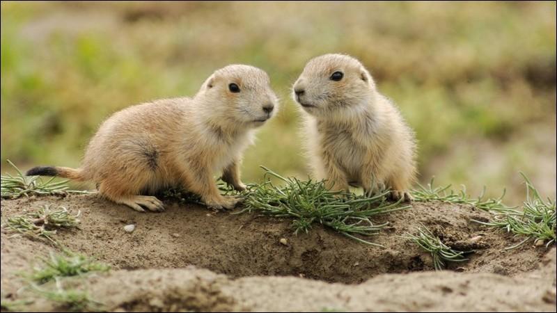 Ses petits sont des marmots.
