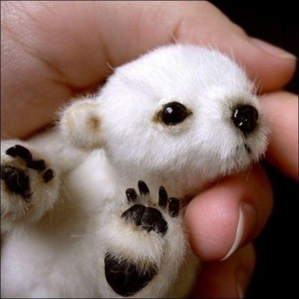 La fonte de la banquise, due au réchauffement climatique, est un réel problème, identifiez cet animal !