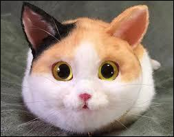 Qu'est-ce qu'un chat ?