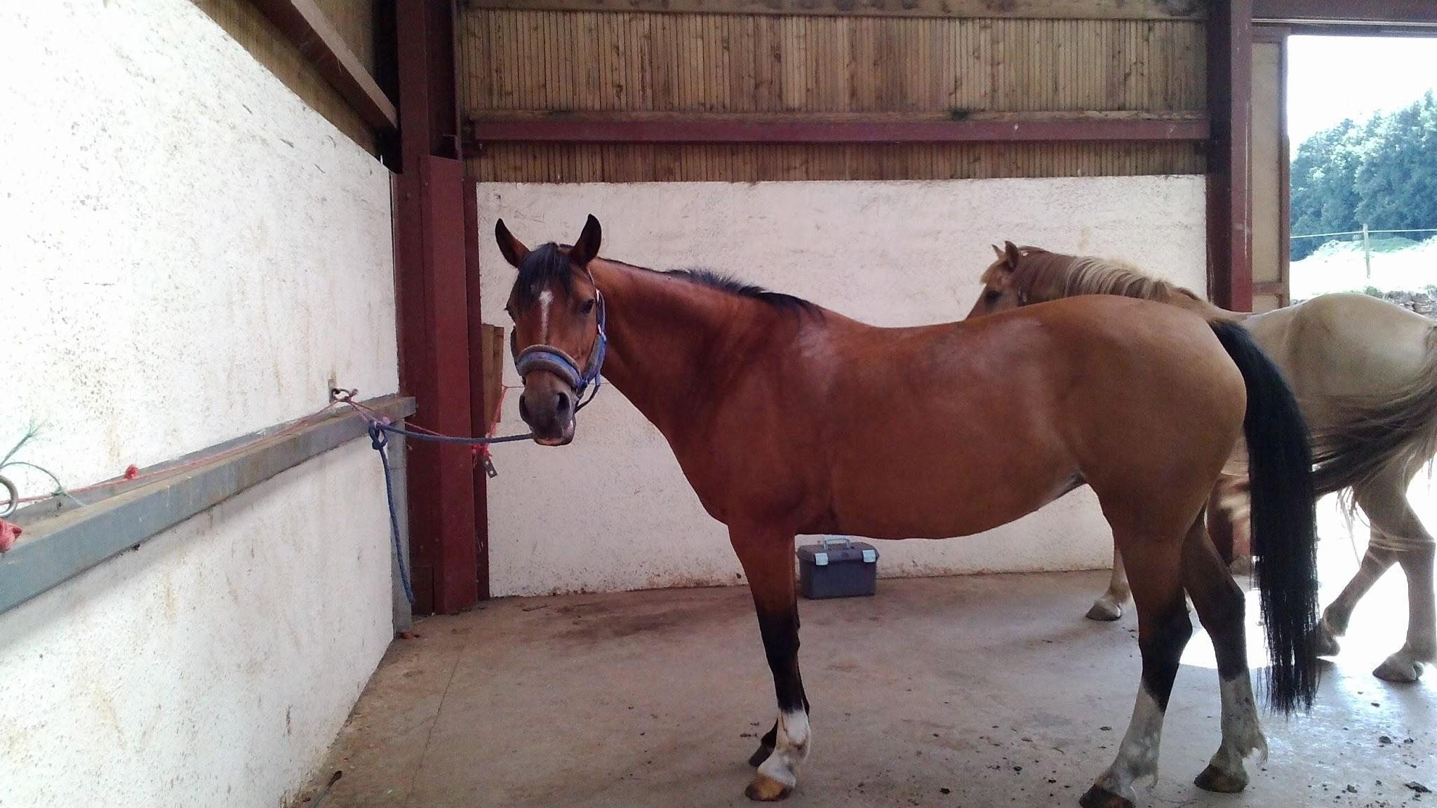 Es-tu fait pour avoir un cheval ?
