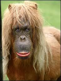 De quelle couleur est le cheval multicolore de Bérangère ?