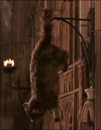 Qui est accusé d'avoir pétrifié Miss Teigne dans Harry potter et la chambre des secrets?