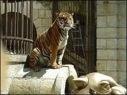 Combien de tigres sont présents au total dans la salle du trésor ?