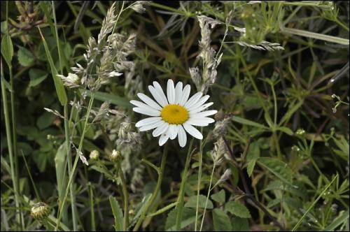 """As-tu effeuillé cette fleur en chantant """"Il (elle) m'aime, un peu, beaucoup, passionnément, à la folie, pas du tout."""" ? Comment écris-tu la deuxième syllabe ?"""