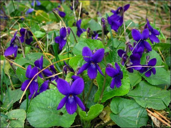 Ces jolies petites fleurs comptent deux pétales vers le haut et trois vers le bas. Ce sont...