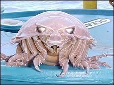 Quel Pokémon est pareil à ce crustacé appelé bathynome géant ?