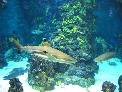 Les sortes de requins