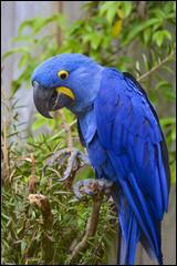 """Découvre le nom de ce bel oiseau bleu en ajoutant une de ces trois lettres au mot """"ra""""."""