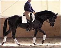 A quelle allure se trouve ce cheval ?