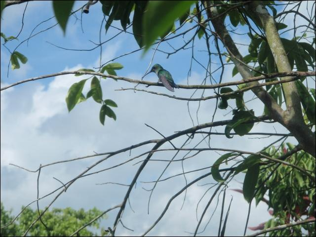 Je suis le colibri, on me trouve !
