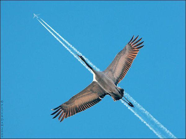 Quel engin trace cette ligne suivie par l'oiseau ?