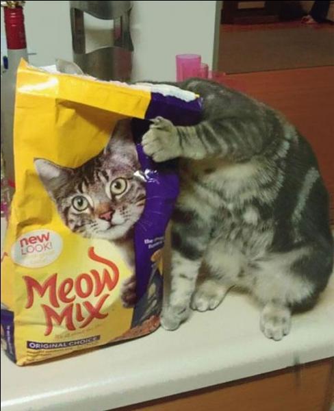 À l'origine, on peut supposer que ce chat cherchait à...