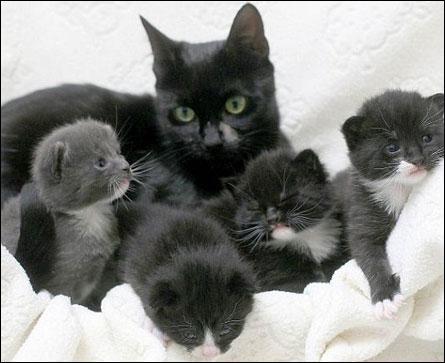 Parmi la portée de chatons à donner, vous avez sélectionné la petite chatte grise. Quand vous revenez la chercher, elle a été donnée à une famille qui voulait à tout prix une femelle, et il vous reste le dernier chaton, un mâle noir et blanc. Que faites-vous ?