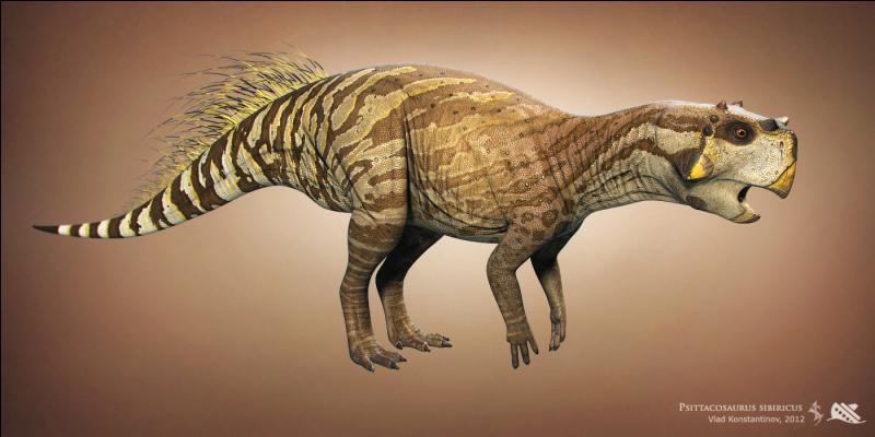 Les marginocéphaliens (dont le psittacosaure ci-dessus serait un représentant primitif) réunissent 2 groupes de dinosaures : lesquels ?