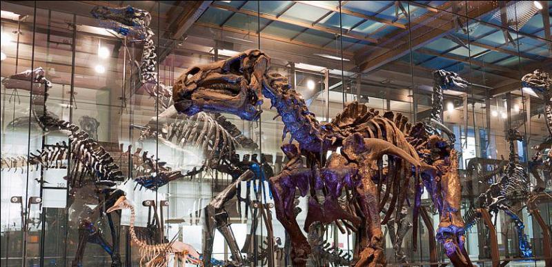 Dans quel pays se trouve la mine de Bernissart où on a découvert une trentaine de fossiles d'iguanodon ?