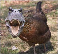 Depuis quand pense-t-on que les oiseaux sont issus des dinosaures ?