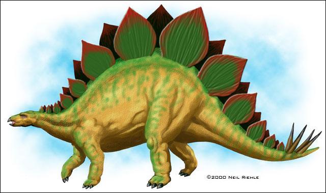 Pourquoi ne sait-on pas avec certitude comment étaient disposées les plaques du stégosaure ?