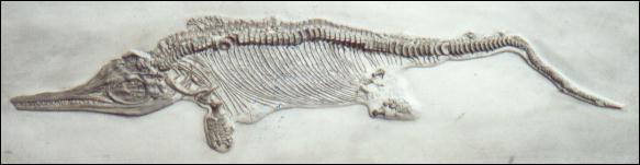 Voici ses 3 plus beaux fossiles, sauriez-vous reconnaître les noms des animaux à qui ils ont appartenu ?