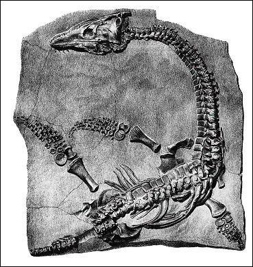 Celui-ci a certainement inspiré la légende du monstre du Loch Ness : ...