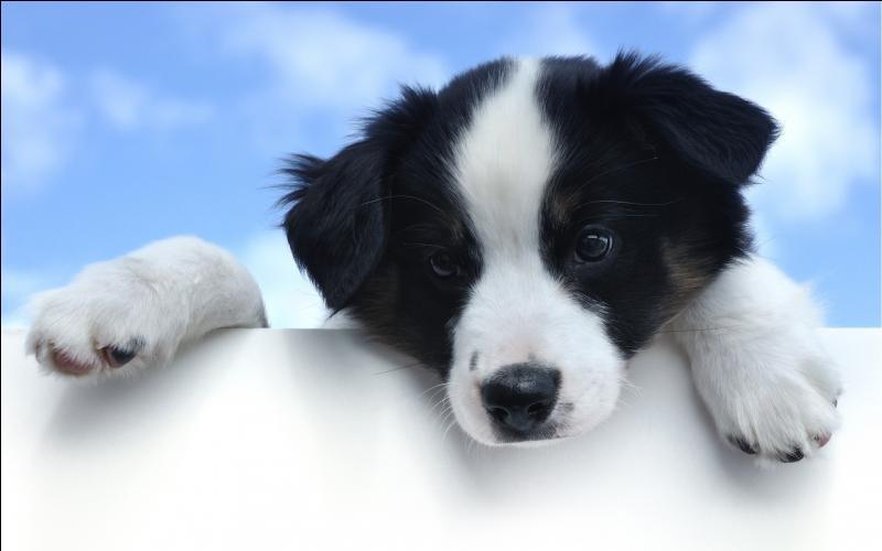 La raison pour laquelle tu possèdes un chien est ...