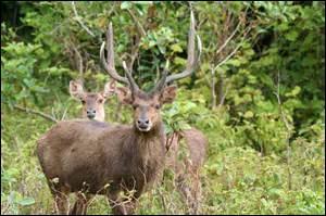 Quel animal imposant est présent sur l'île à l'état sauvage ?