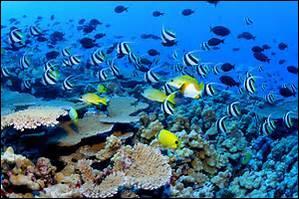 A l'île Maurice, peut-on aller se baigner facilement malgré la présence des requins ?
