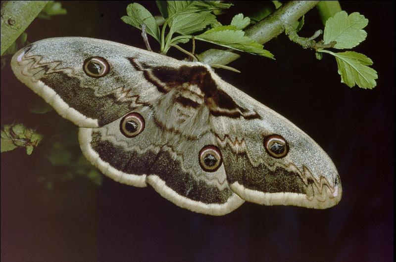 C'est un papillon...