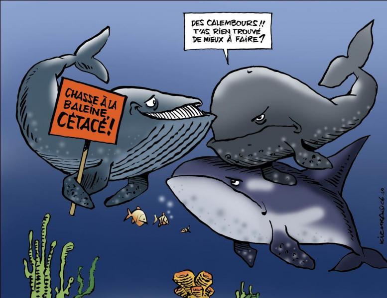 Que fait une baleine lorsqu'on la chatouille ?