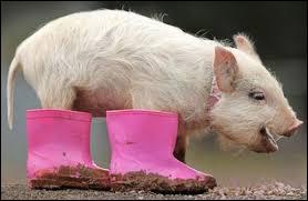 Pourquoi un Belge court-il après un cochon avec une hache ?