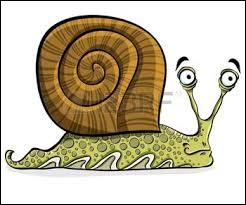 Que dit un escargot quand il voit passer une limace dans la rue ?
