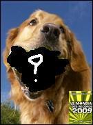 Le chien ayant mis le plus de balles de tennis dans sa bouche est un golden retriver, il en a mis ....