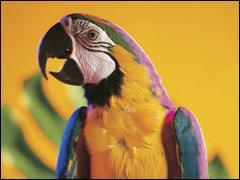 En captivité, le plus vieux perroquet a vécu jusqu'à ....