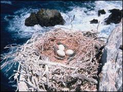 Le plus long nid de tous les temps appartient au macareux rhinocéros, son nid peut mesurer jusqu'à ......
