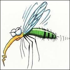 """Comment les moustiques s'orientent-ils pour trouver une """"victime"""" à piquer ?"""
