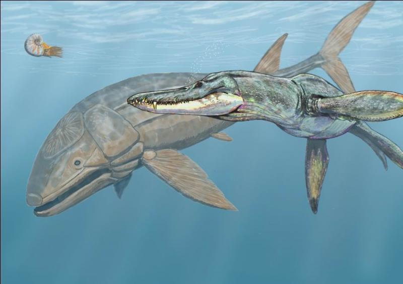 Quelle taille avait le Leedsichthys (à gauche) ?