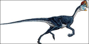 Sur quel continent a vécu l'oviraptor ?
