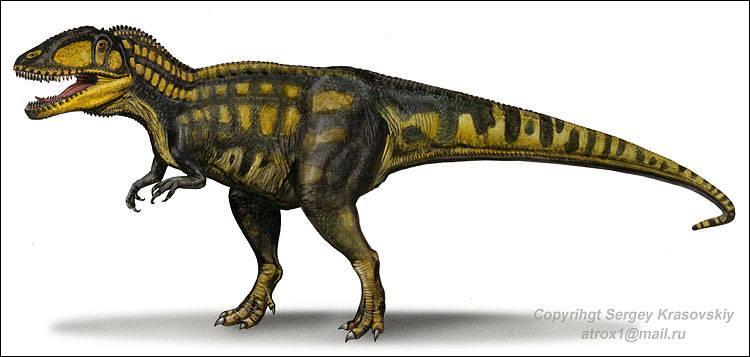 Sur quel continent a vécu le carcharodontosaure ?