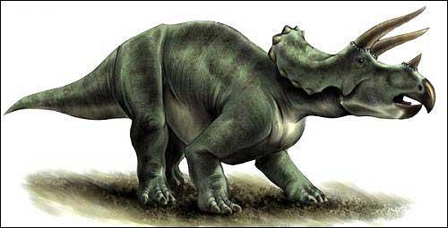 Sur quel continent a vécu le tricératops ?