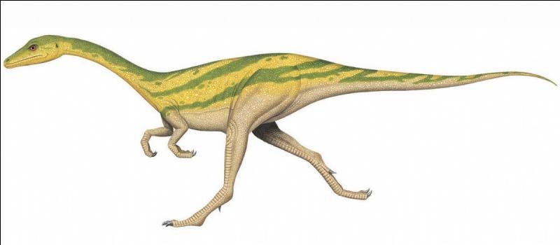 Sur quel continent a vécu le compsognatus ?