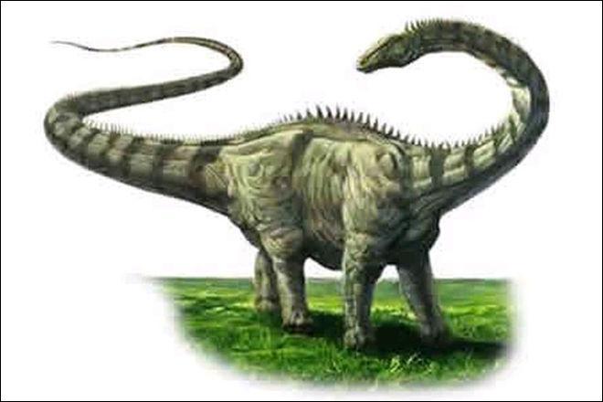 Sur quel continent a vécu le diplodocus ?
