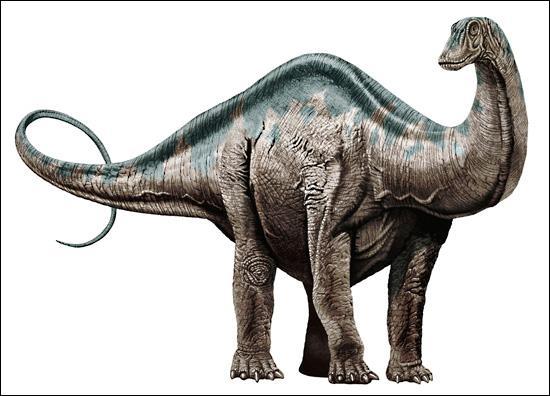 Sur quel continent a vécu l'apatosaure ? (brontosaure)