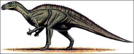 Où a-t-on découvert le plus d'iguanodons ?
