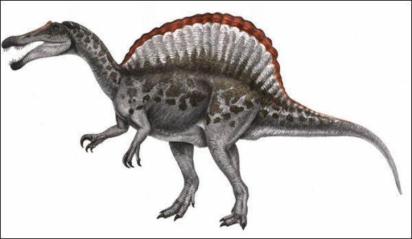 Sur quel continent a vécu le spinosaure ?