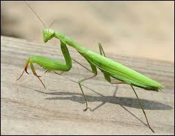 Quel est le nom de l'insecte présenté sur la photo ?