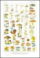 """D'où vient le terme """" champignon """" ?"""