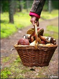 En France, comment la cueillette des champignons est-elle réglementée ?