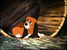 Quizz les chiens dans tous leurs tats 4 quiz animaux - Volt chien race ...