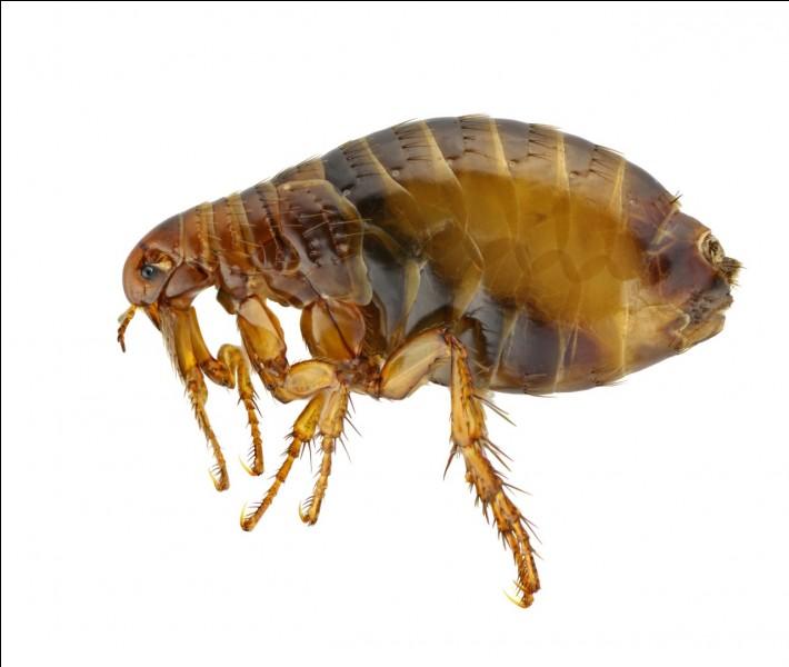Quelle forme doit-on donner à cette bestiole parasite pour obtenir un nouvel insecte différent ?